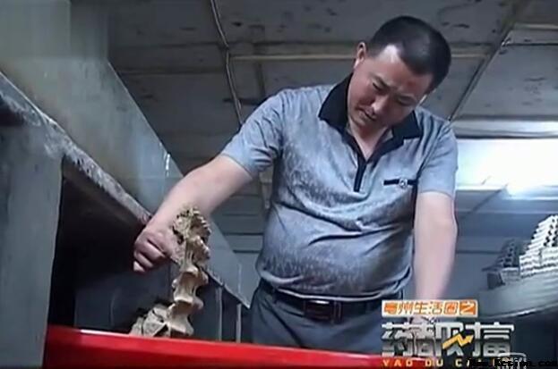 亳州霞康苏之勇的蝎子养殖创业路