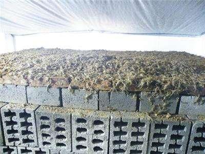 谈谈大棚蝎子养殖仿生态养蝎法的好处