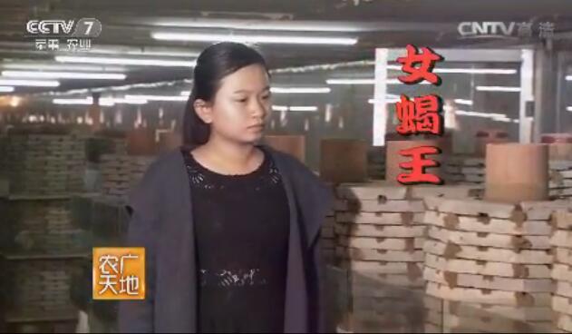 济宁兖州养蝎女孩方程蝎子养殖视频